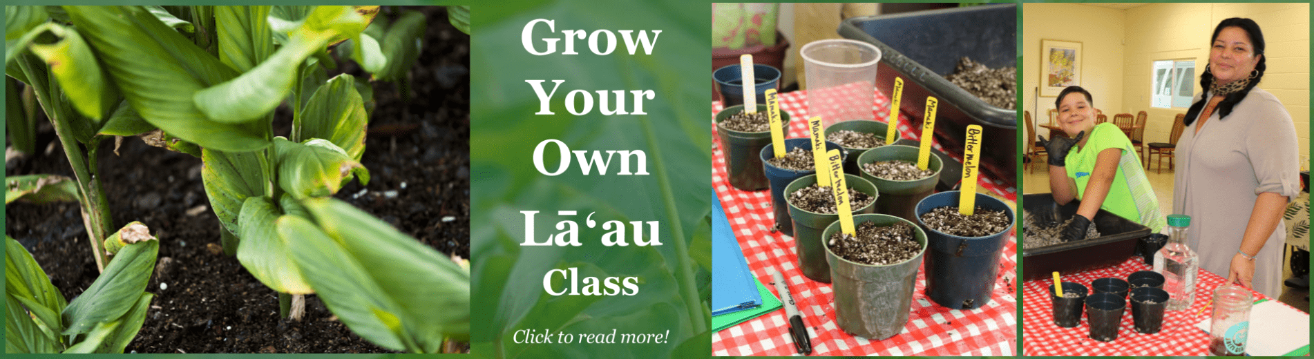 Grow Your Own Laau Class
